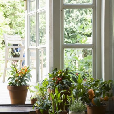 9 house plants to improve air quality
