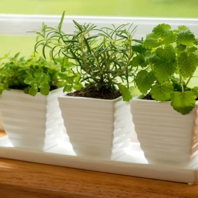 It's no secret that the moist, warm air of summer allows your house plants to thrive.