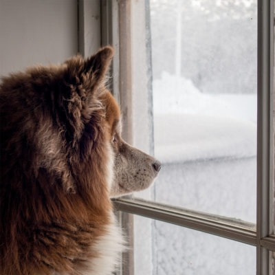 brown dog looking out old window at snow