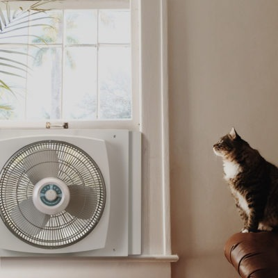 cat sitting near Lasko window fan
