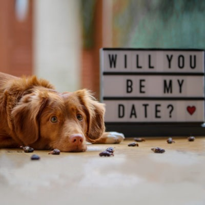 brown-dog-laying-on-floor-in-front-of-sign-that-says-will-you-be-my-date